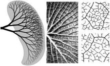 Nature inspired optimal design of heat conveying networks for advanced fiber-reinforced composites